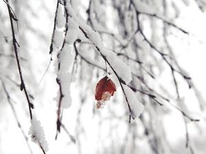 Дожди и снегопады продолжатся на выходных в Новосибирске