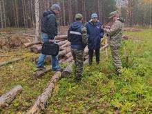 Главу села на Южном Урале требуют наказать за вырубку деревьев в заповедной зоне