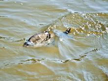 В Манском районе края проверят золотодобытчиков из-за загрязнения реки Кувай