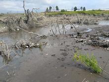 Прокуратура подала в суд на мэрию Челябинска из-за экологической угрозы Первому озеру