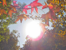 Красноярск ожидает рекордно теплого четверга