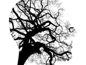 Улучшить работу мозга реально в любом возрасте. Он меняется словно живое существо