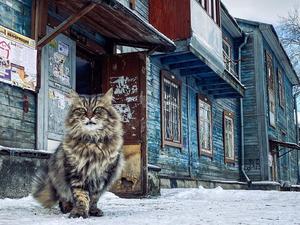 Деревянные дома Екатеринбурга оснастят видеонаблюдением