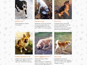 В Челябинске раздают собак из ликвидированного питомника
