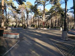 Реконструкция Зеленой рощи вызвала шквал критики и мобилизовала студентов на охрану парка