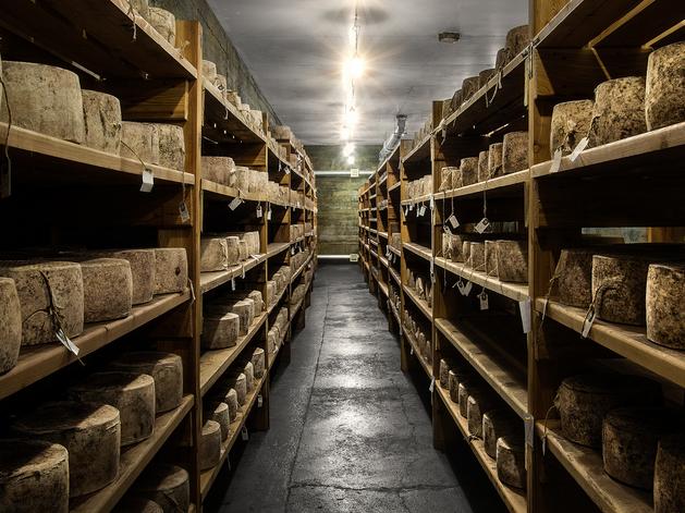 «Не только варим, но и учим правильно есть». Как производят английский сыр на Урале