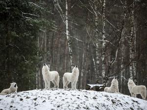 Усилятся морозы в Новосибирске с понедельника