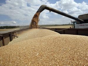 Экспорт красноярского зерна в Китай станет возможен только по согласованию с Поднебесной