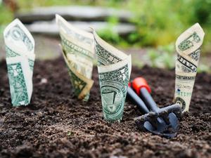 Расти, акция, большая и маленькая: как заработать на фонодовом рынке перед Новым годом?