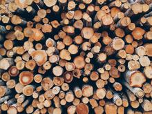 Крупнейший деревообработчик региона запустил акселератор инновационных проектов в ЛПК