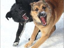 Более двух тысяч бродячих собак отловили в Красноярске