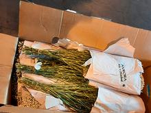 Россельхознадзор уничтожил 110 тысяч цветов из Германии