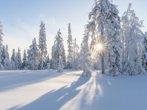 Усилятся морозы на выходных в Новосибирске