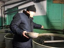 Деликатес местного производства. В Нижегородской области начали разводить мраморного сома