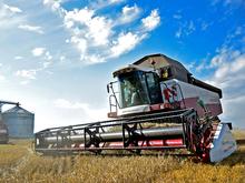 Красноярский АПК побил рекорд по урожайности зерновых
