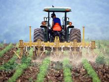 Более 200 млн рублей господдержки получили новосибирские фермеры