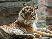 «Азиатским тигром» в сфере ВЭД назвал Решетников Новосибирскую область