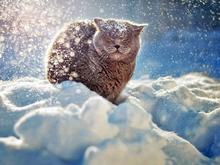 Когда отступят лютые морозы в Красноярске