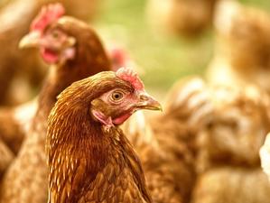 Крупную птицефабрику оштрафовали за загрязнение воздуха