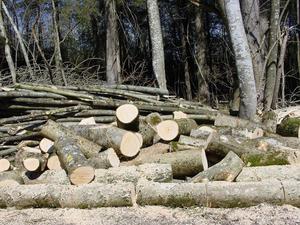 Трагедия в Новый год. На лесозаготовительном предприятии прогремел взрыв