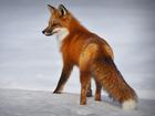 Сильные морозы снова придут в Новосибирск во второй половине января