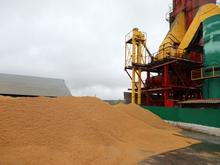Красноярские аграрии заработали на экспорте $66,5 млн