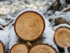 Ученые СФУ нашли противоречия в официальной статистике лесной отрасли России