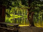 В пойме реки Каменки в Новосибирске создадут ландшафтный парк
