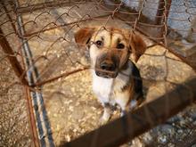 За отлов бездомных собак мэрия Красноярска заплатит свыше 7 млн рублей