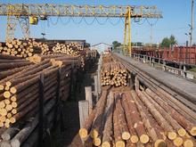 Поставки сибирского круглого леса за рубеж сократились почти на четверть