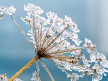 Зима еще напомнит о себе. Как не сойти с ума и не потерять здоровье до прихода тепла