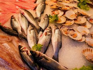 Сеть магазинов «Рыба пила» стала поставщиком Bellini