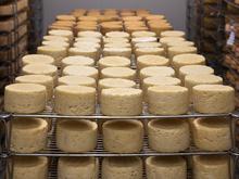 «Молочная отрасль станет главным драйвером потребления животного белка в РФ»