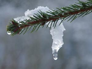 Потепление до плюсовой температуры ожидается в Новосибирске