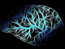 Ваш мозг просит это каждый день. 5 вещей, без которых нет ни памяти, ни сосредоточенности