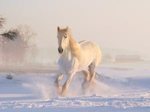 Продолжит теплеть в Новосибирске на неделе