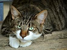 «Да, это диверсия» — реакция депутатов Гордумы на правила содержания домашних животных