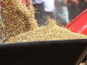 В Шарыповском районе построят комплекс глубокой переработки зерна