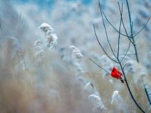 Морозная погода ждет новосибирцев в праздничные дни