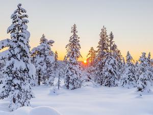 Небольшой мороз и сильный ветер придут в Новосибирск после выходных