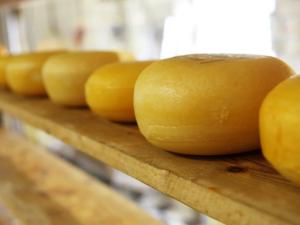 Сыроварня «Известная» создаст «молочный хаб» в Челябинской области