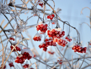 Мороз и снегопады: синоптики рассказали о погоде в Новосибирске на выходных