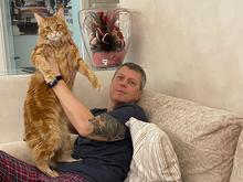 «Терпят нас за вкусняшки»: котики, которые стоят за екатеринбургскими бизнесменами