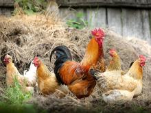 Россельхозбанк открыл «Школы фермера» еще в 12 регионах страны