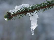 Теплая и ветреная погода ждет новосибирцев на праздничных выходных