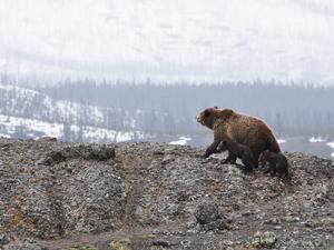 Успехи в освоении Арктики предлагают ввести в KPI для губернаторов
