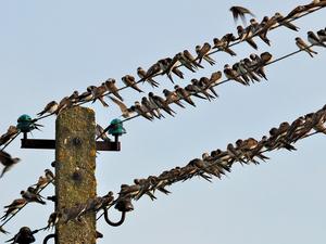 «Собрания — это капитал лидерского репертуара». Как нужно готовиться к совещанию