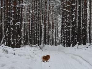 Не по-весеннему холодно станет в Новосибирске