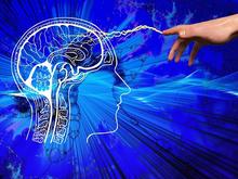 Наш мозг хранит воспоминания в двух полушариях, копируя и делясь данными