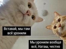 Мем «про Наташу и котов» зарегистрируют как товарный знак